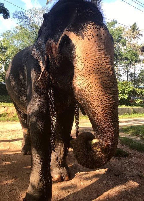 Raja The Elephant With Co & Co Organics