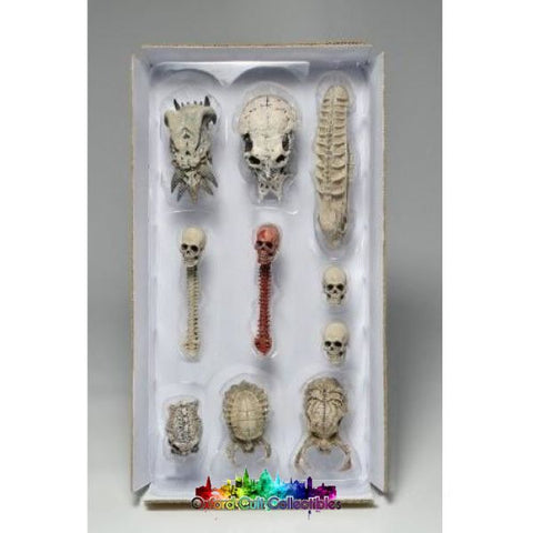 Predator Trophy Skull Set