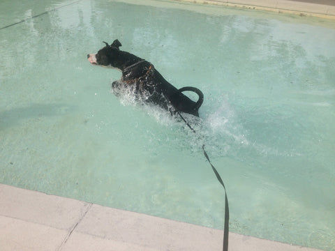 Dog having fun in the pool