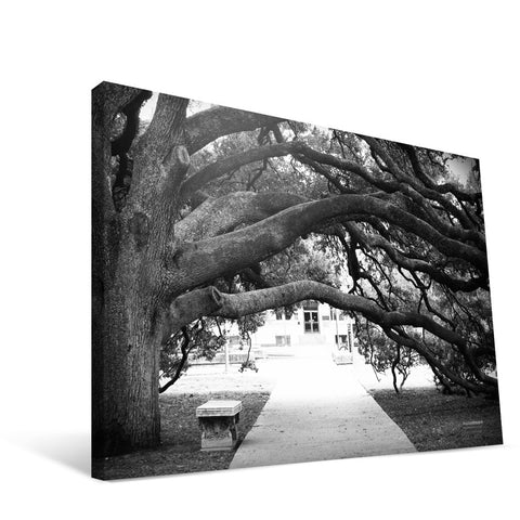 Texas A&M Aggies Century Tree Canvas Print