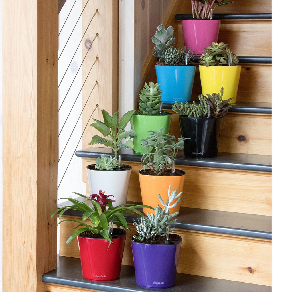 aquaphoric self-watering planters of many colors