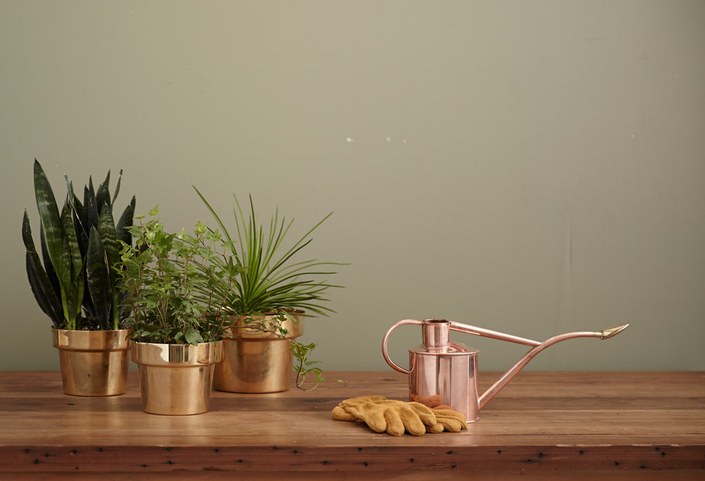 little potted plants in copper containers
