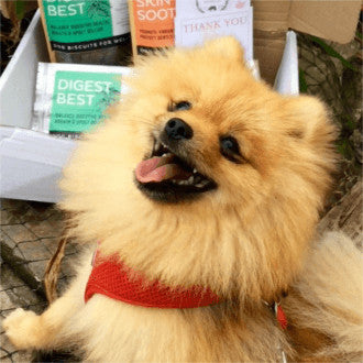 Rui, King of the Pomeranians