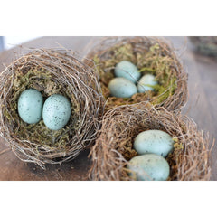 Bird Nests with Eggs