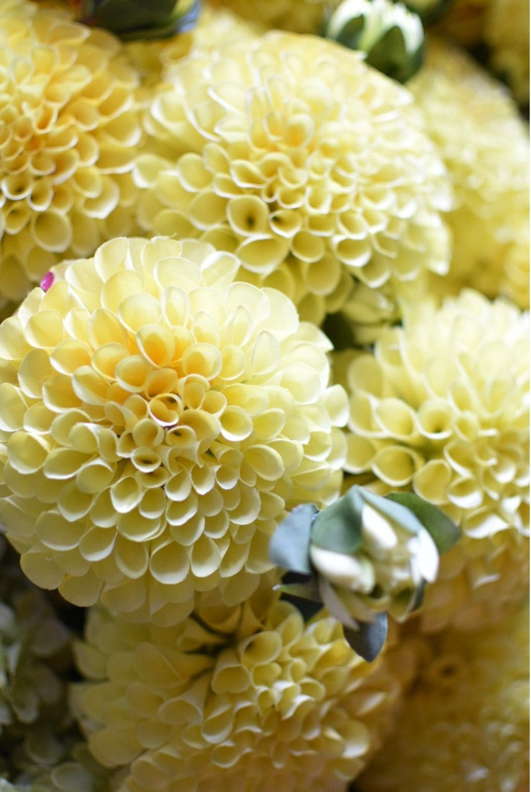 "31"" Dahlia Spray Yellow Red"