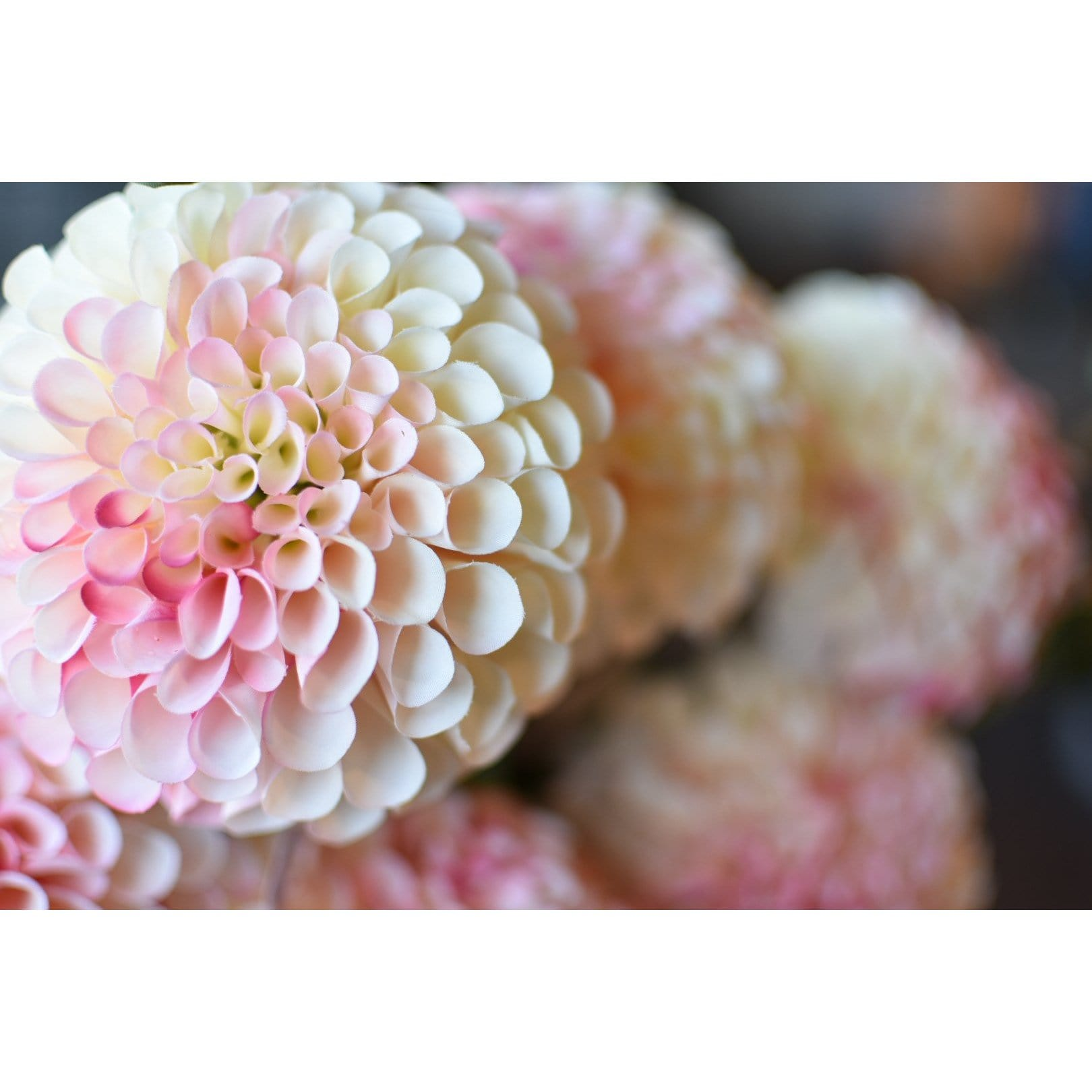 "31"" Dahlia Spray  Pink Cream"