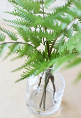 "14"" Forest Fern in Glass Vase"