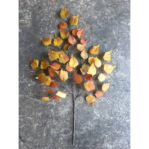 "26"" Faux Birch Leaf Spray Orange/Mustard/Yellow"