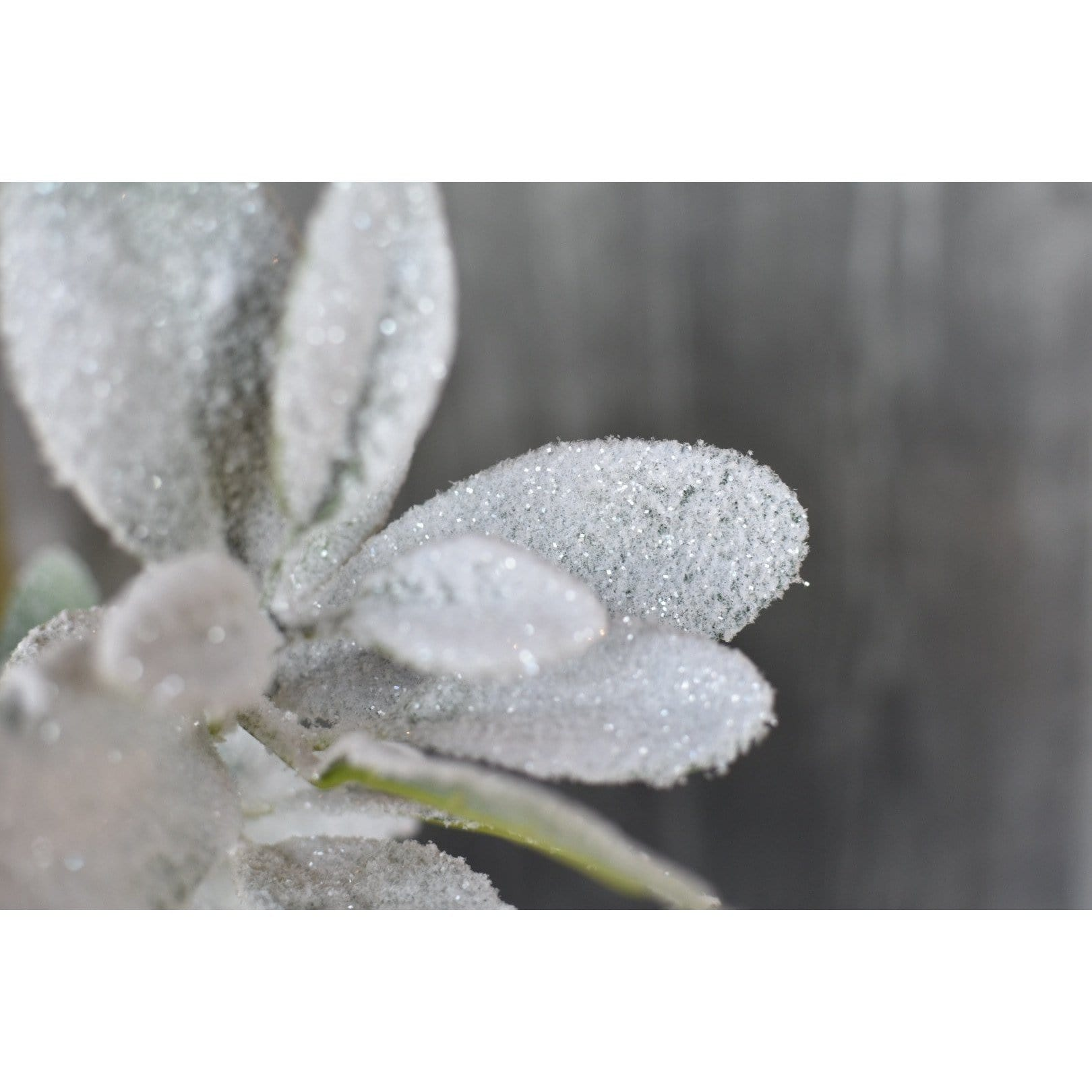 "28"" Snowed Lambs Ear Spray"