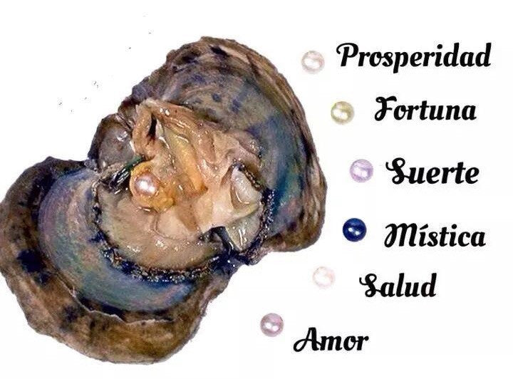 12 Oysters Reveal to be open by you🐚12 Ostras con Perlas para ser abiertas por usted