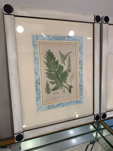 Antique Fern Print #2 Framed