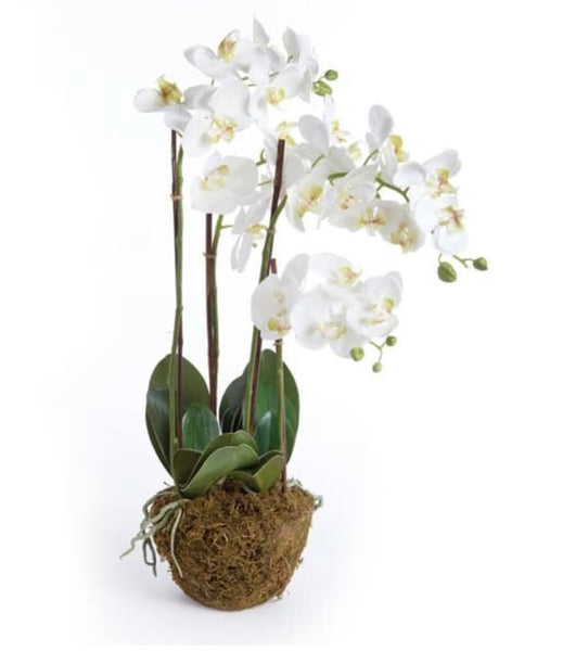 30 inch Phalaenopsis Drop-In Orchid