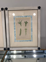 Antique Fern Prints,Framed