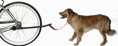 Dogs and bicyle=happiness