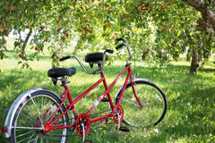 Tandem Bike for Rent