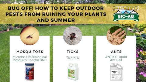 Bug Off! How to Keep Outdoor Pests From Ruining Your Plants and Summer