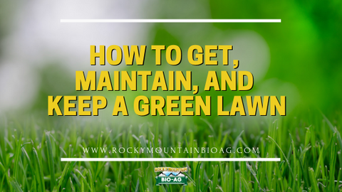 How To Get, Maintain, And Keep A Green Lawn