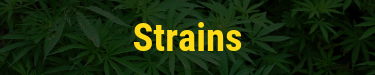 What are strains?