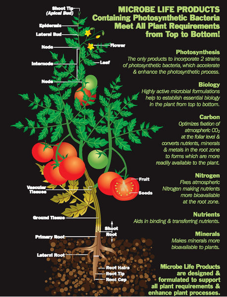 Microbe Life Products Meet all Plant Requirements from Top to Bottom - Rocky Mountain Bio-Ag