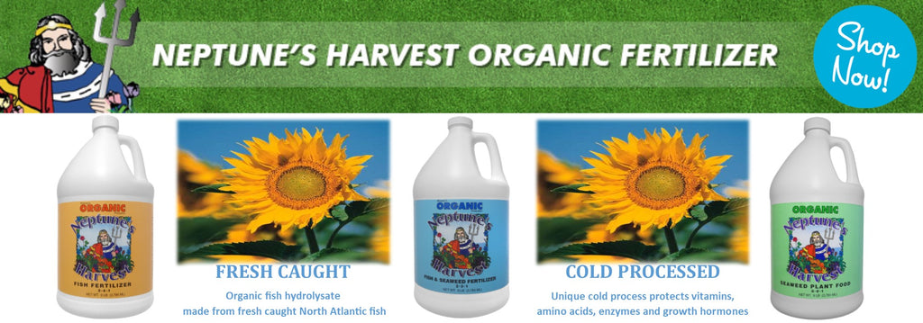neptune's harvest fish fertilizer fish hydrolysate fish emulsion liquid seaweed fish and seaweed blend organic fish fertilizer the best fish fertilizer rocky mountain bioag