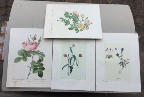 4 Italian Botanical Prints Unframed,Paintings - Hatherley Fine Art Gallery
