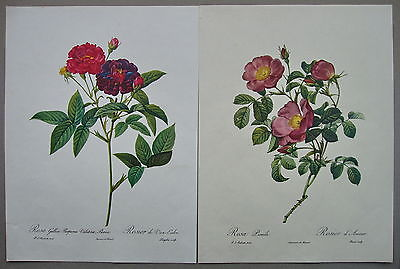 Pair of Roses Prints,Other Art - Hatherley Fine Art Gallery
