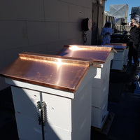 Pigeon or peaked langstroth lid with optional copper cover