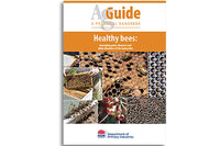 Healthy bees
