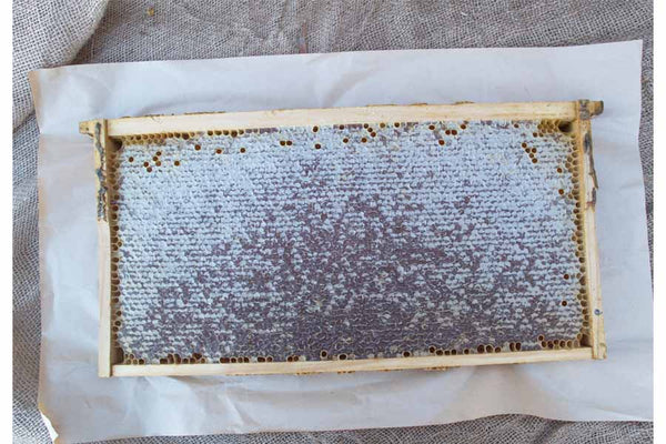 Complete Honey Frame