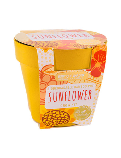 Dwarf Sunflower grow pot