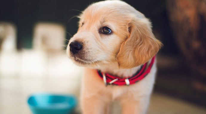 Do You Qualify for an Emotional Support Animal (ESA)? - TheTouchPoint Solution ™