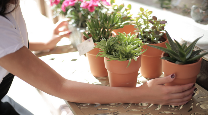 8 Houseplants to Calm Your Mind