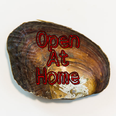 Open at Home Poshzilla Oyster