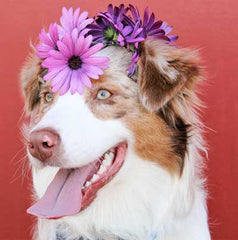 jewelry stores dog with flowers image