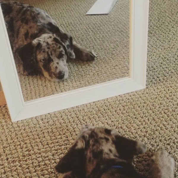 rescue puppies in mirror