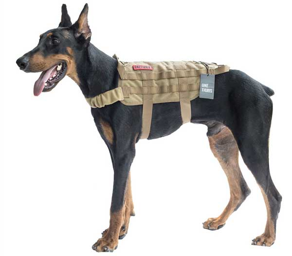 tactical dog harness on Doberman