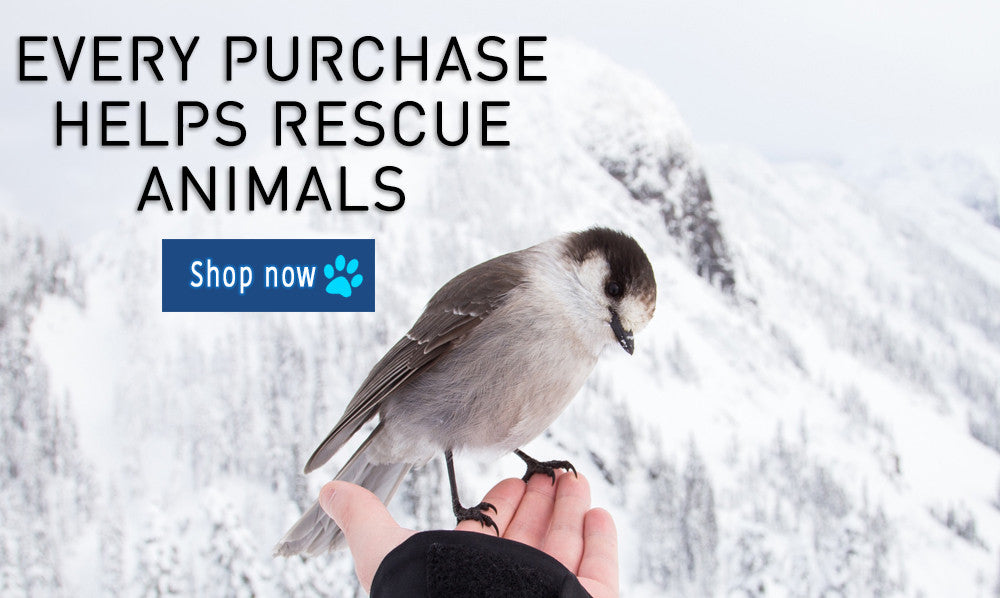 Pet boutique and animal lover store The Kind Owl homepage bird rescue image