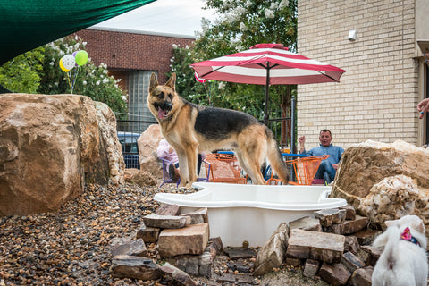 Bark Bar Tips for Keeping Your Dog Safe from Summer Heat