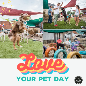 Love Your Pet Day at Bark Bar