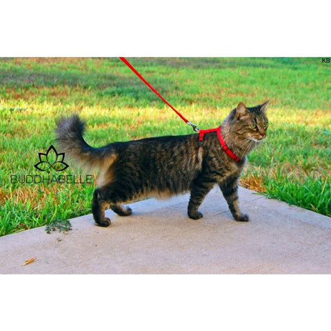 Pet Safe Adjustable Cat Harness And Leash 4 Colors Available Lover