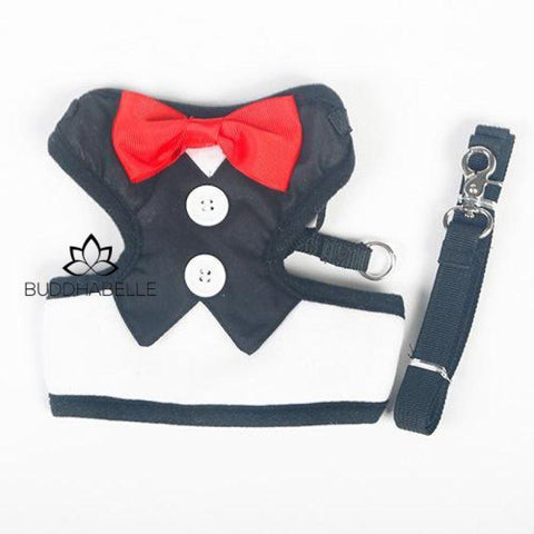 Fancy Bow Tie Pet Safe Adjustable Cat Harnesses Limited Edition Black / S Lover