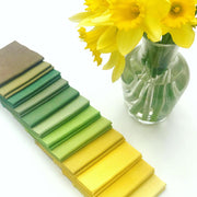 Daffodil Colour Pick