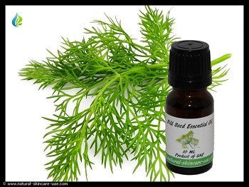 Dill Seed Essential Oil (10 ml) | NATURAL COSMETIC UAE
