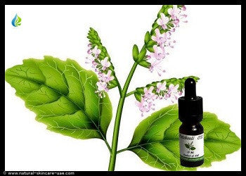 Patchouli CO2 Extract (15 ml) | Natural Cosmetics UAE