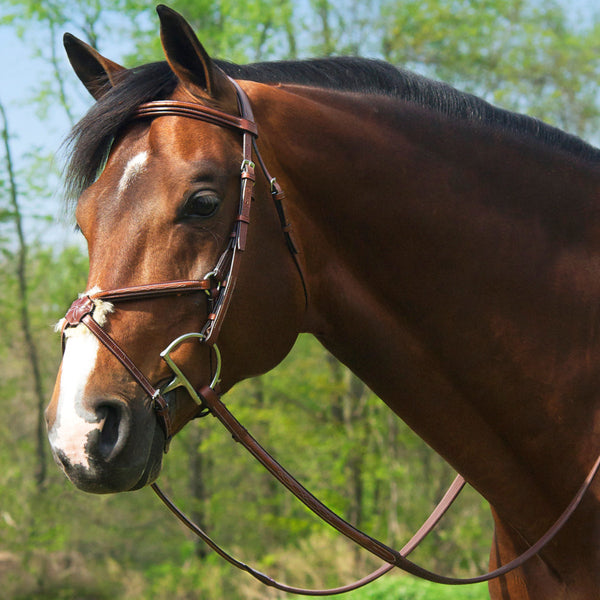 Conquer Figure Eight Bridle