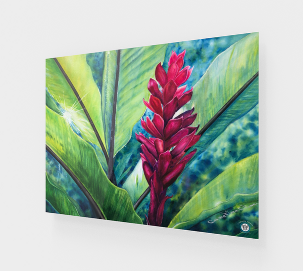 """Tropical Flame"" Fine Art Acrylic Print, Hawaiian Torch Ginger art by artist © Christie Marie"