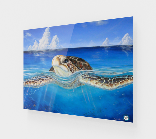"""Peace of the Tropics"" Fine Art Acrylic Print, Tropical Sea Turtle Art by Artist © Christie Marie"