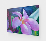 """Blooming"" Fine Art Acrylic Print, Plumeria / Frangipani Tropical Flower Art by artist © Christie Marie"