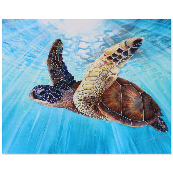 Aloha Spirit - Acrylic Print - Hawaiian Sea Turtle swimming in clear blue ocean waters