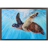 Aloha Spirit - Economy Framed Prints - Hawaiian Sea Turtle swimming in clear blue ocean waters